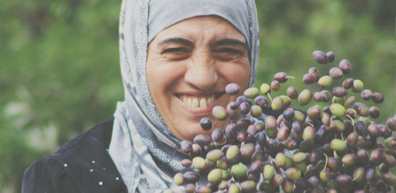 holy-land-trust-olive-harvest-image12.jpg